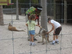 Petting and feeding kangaroo!