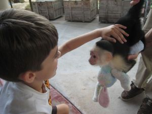 wow! petting a monkey.